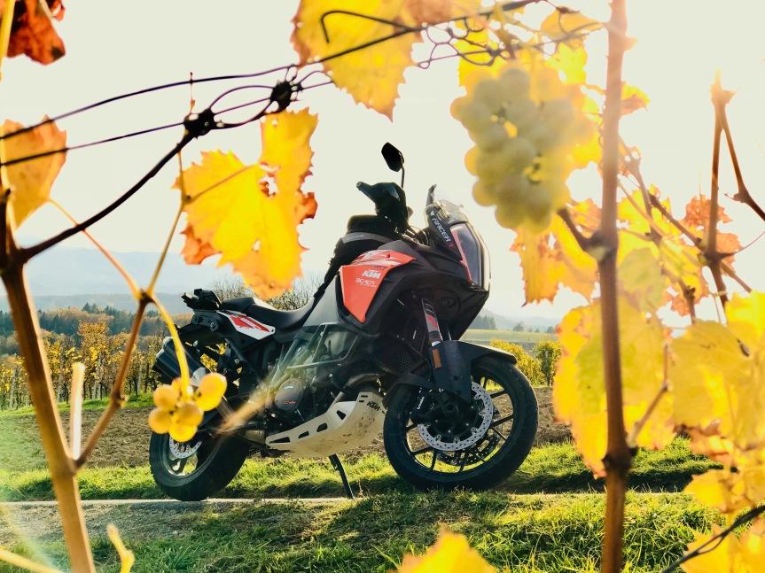 Wie ich den Herbst liebenlernte